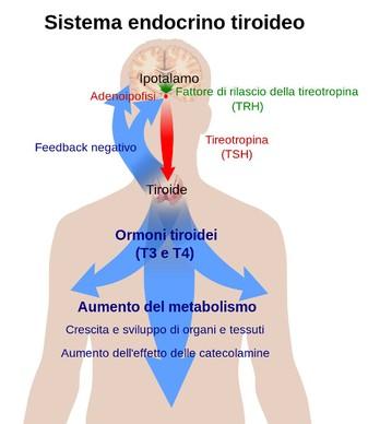 Allergie e tiroide